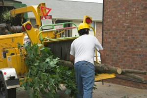 Photo #1: TREE TRIMMING & TREE REMOVAL. LICENSED FREE QUOTE!