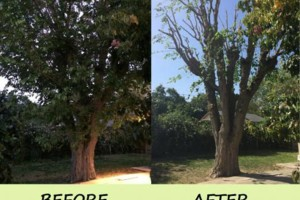 Photo #2: CEN CAL TREE TRIMMING & REMOVAL