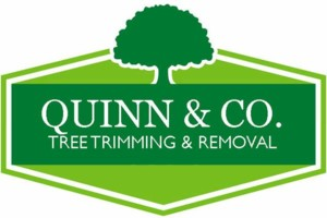 Photo #1: TREE TRIMMING & TREE REMOVAL... Fast, Local & Reliable.