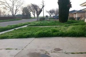 Photo #1: Lawn Service - cutting, edging and clean up