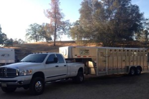 Photo #8: Trailer hauling transport moving