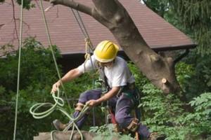 Photo #1: Fresno Tree Services: Neighboorhood Tree Man