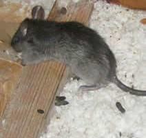 Photo #1: Good Cents Pest Control