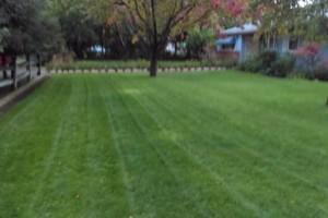 Photo #13: JJR lawn service