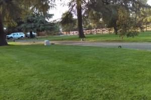 Photo #4: JJR lawn service