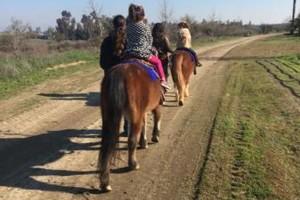 Photo #3: Pony Tales & Trails. Pony rides!!!