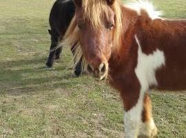 Photo #1: Pony Tales & Trails. Pony rides!!!