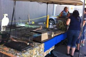 Photo #8: Reptile Ron Animal Presentations