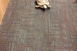 Photo #9: Reptile Ron Animal Presentations