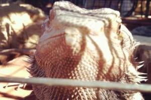 Photo #12: Reptile Ron Animal Presentations