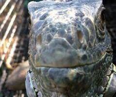 Photo #17: Reptile Ron Animal Presentations