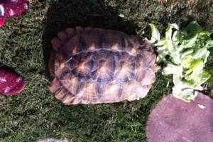 Photo #18: Reptile Ron Animal Presentations