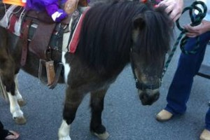 Photo #1: Pony Rides for your event!