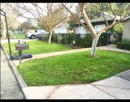 Photo #5: GREEN GROW Lawn, Yard and Tree Services
