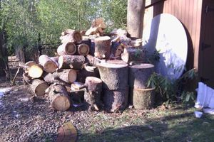 Photo #5: Tree removal. Tree service. Tree care