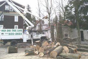 Photo #3: Tree removal. Tree service. Tree care