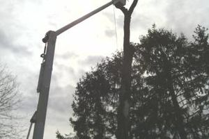 Photo #1: Tree removal. Tree service. Tree care