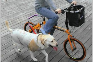 Photo #3: Professional dog biker for hire