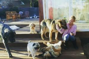 Photo #2: Playful Paws Petsitting. Dog Walkers & Pet sitters