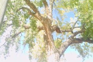 Photo #2: A BETTER TREE SERVICE L.L.C. LICENSED / FULLY INSURED