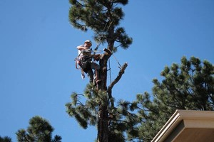 Photo #11: Tree Man - Tree Service & Fire Prevention EST. 2002