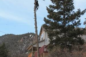 Photo #10: Tree Man - Tree Service & Fire Prevention EST. 2002