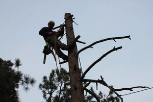 Photo #9: Tree Man - Tree Service & Fire Prevention EST. 2002