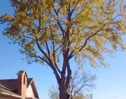 Photo #10: Pinnacle Tree and Shrub Service,LLC.