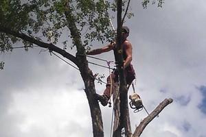 Photo #8: Pinnacle Tree and Shrub Service,LLC.