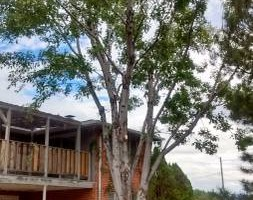 Photo #7: Pinnacle Tree and Shrub Service,LLC.