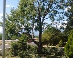 Photo #5: Pinnacle Tree and Shrub Service,LLC.