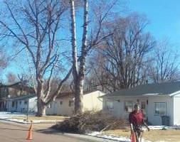 Photo #4: Pinnacle Tree and Shrub Service,LLC.