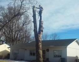 Photo #3: Pinnacle Tree and Shrub Service,LLC.