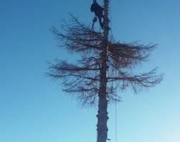 Photo #2: Pinnacle Tree and Shrub Service,LLC.