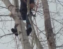 Photo #1: Pinnacle Tree and Shrub Service,LLC.