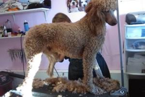 Photo #8: Dawn's Professional Pet Grooming