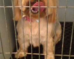 Photo #7: Dawn's Professional Pet Grooming
