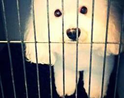 Photo #5: Dawn's Professional Pet Grooming