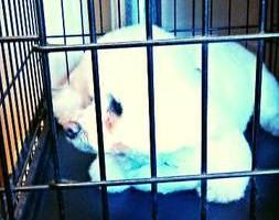 Photo #4: Dawn's Professional Pet Grooming