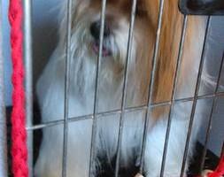 Photo #2: Dawn's Professional Pet Grooming
