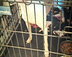 Photo #1: Dawn's Professional Pet Grooming