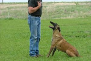 Photo #1: K-9 Masters Dog Academy. Dog Training