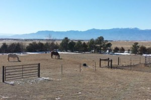 Photo #7: Full Care Horse Boarding-Private Stable