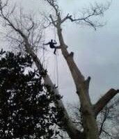 Photo #6: BOWLDS FAMILY TREE SERVICE - INSURED!