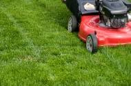 Photo #1: Lawn and Landscaping and Gutter Cleaning