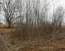 Photo #5: Clay's Pasture clearing