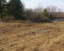 Photo #4: Clay's Pasture clearing