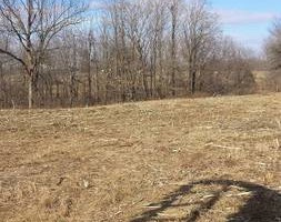 Photo #3: Clay's Pasture clearing