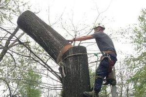 Photo #4: Experienced tree care and removal
