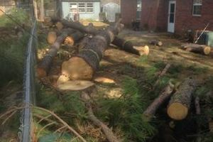 Photo #3: Experienced tree care and removal
